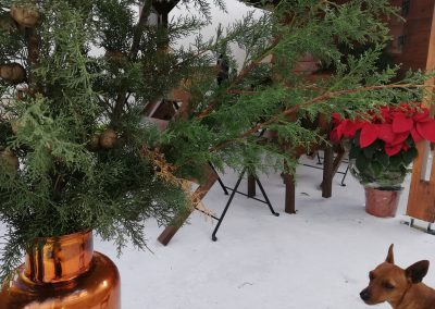 Kaizer Cyprus Agrotourism - IMG 20181222 104137