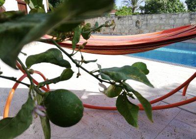 Kaizer Cyprus Agrotourism - IMG 20190517 164430