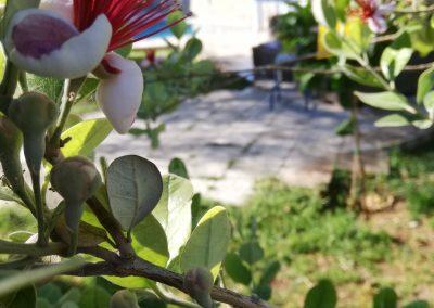 Kaizer Cyprus Agrotourism - IMG 20190526 080324