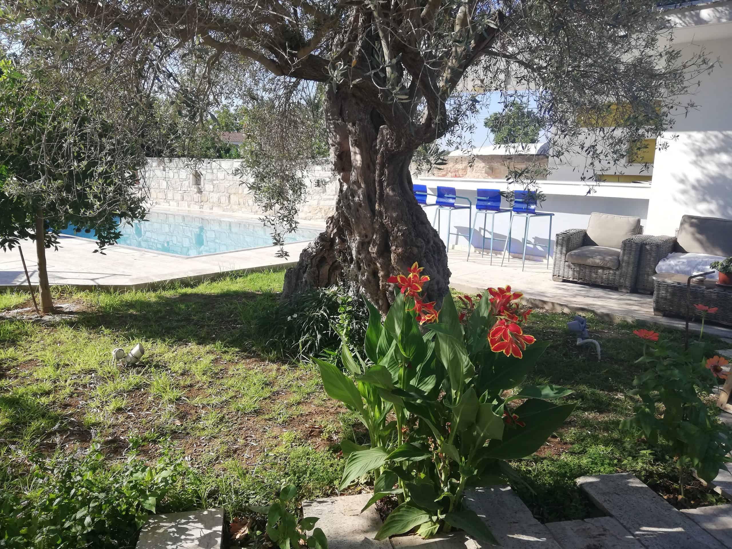 Kaizer Cyprus Agrotourism - IMG 20190821 085913 1 scaled