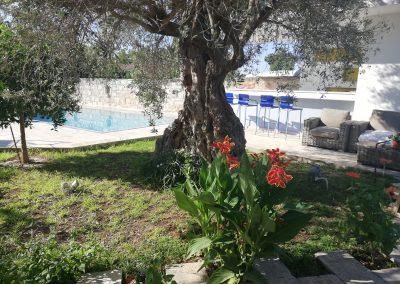 Kaizer Cyprus Agrotourism - IMG 20190821 085913