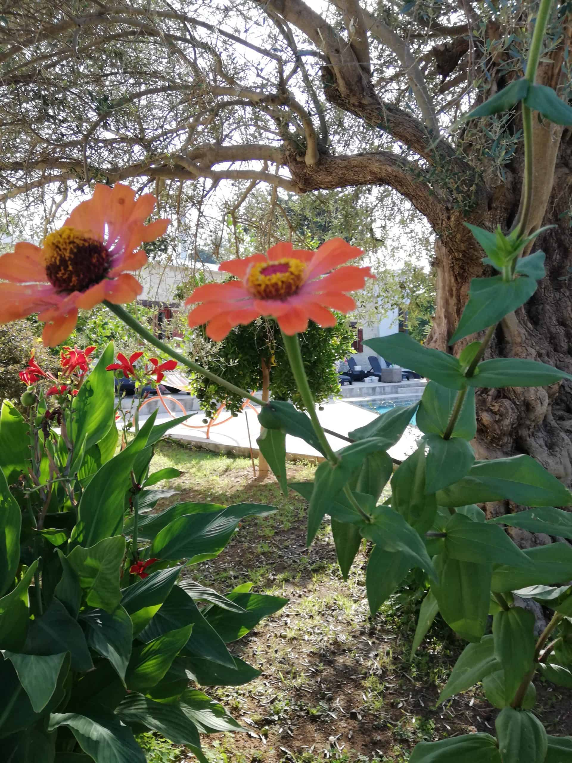 Kaizer Cyprus Agrotourism - IMG 20191026 101323 1 scaled