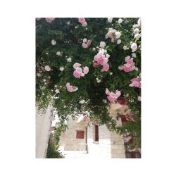 Kaizer Cyprus Agrotourism - 1 1 original 9