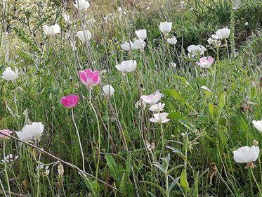 Kaizer Cyprus Agrotourism - 57311598 318029362221088 2352701785312854016 n